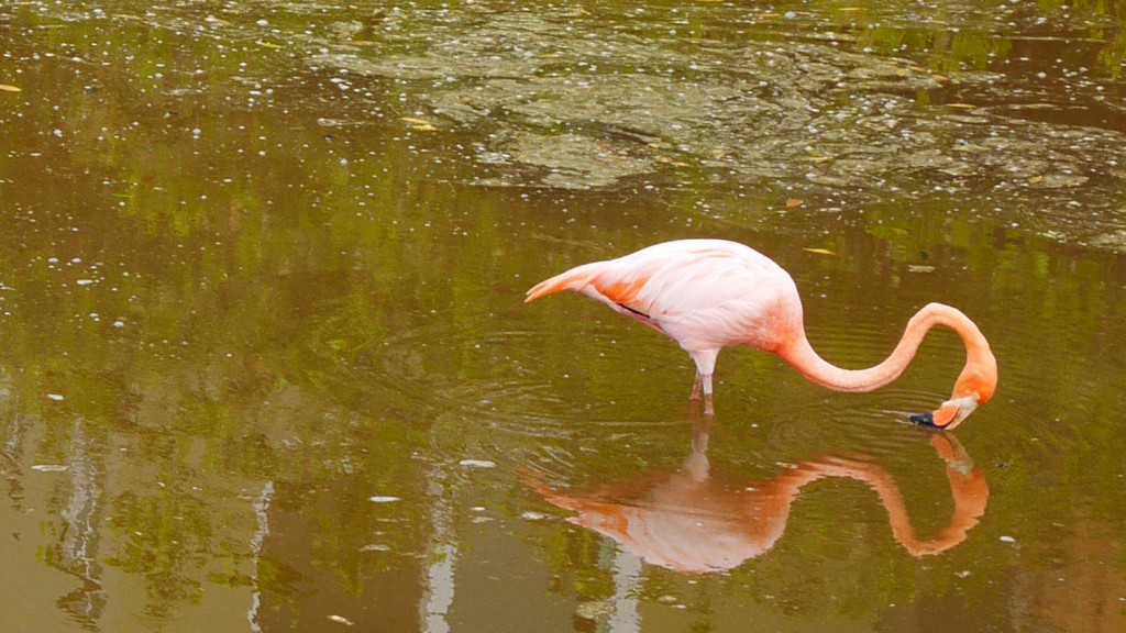 DropboxChooserAPI_bubbel-flamingo