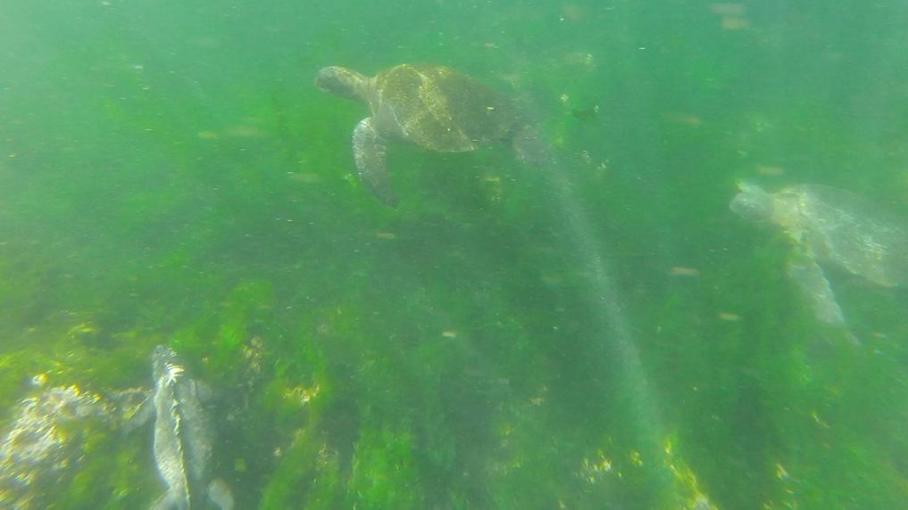 DropboxChooserAPI_djurlivet-snorkling-i-en-bild