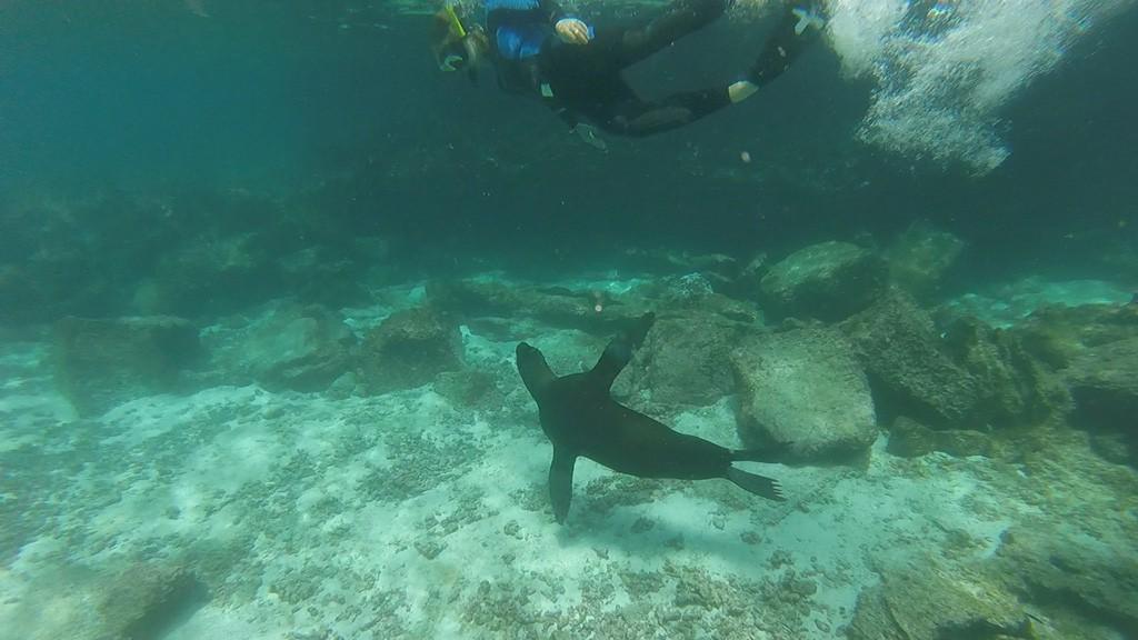 DropboxChooserAPI_simma-med-sjölejon