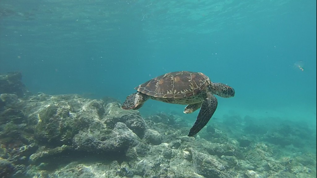 DropboxChooserAPI_vattenskoldpadda