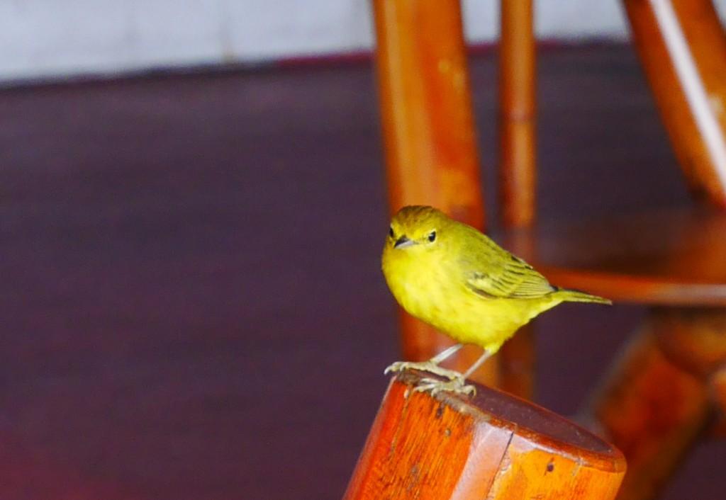 liten-gul-pippi