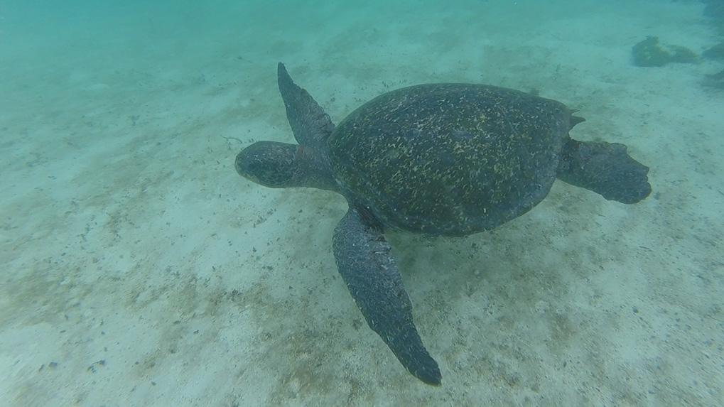 simma-med-skoldpadda-4